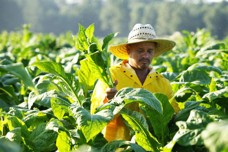 Program Seeks to Grow New Crop of Farmers | North Carolina Agriculture | Scoop.it