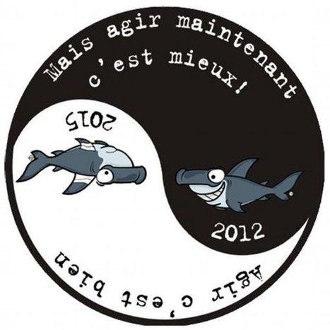 Shark Angels : des militants pour sauver les requins, Actualités plongée : DivOsea | Dans mes bulles... | Scoop.it