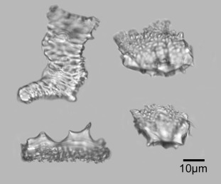 Phytoliths as a tool for investigations of agricultural origins and dispersals around the world | Archaeobotany and Domestication | Scoop.it