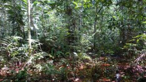 Un puits de carbone géant découvert au Congo | Biodiversité | Scoop.it