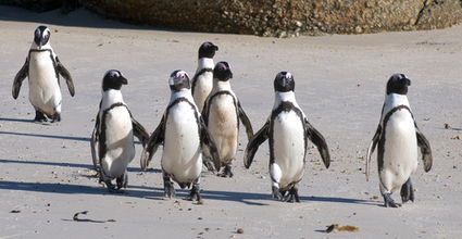 March of the Penguins, Which Led to a Friendly Panda, and Finally a Recovery | Search Engine Journal | SEO Daily Dose | Scoop.it