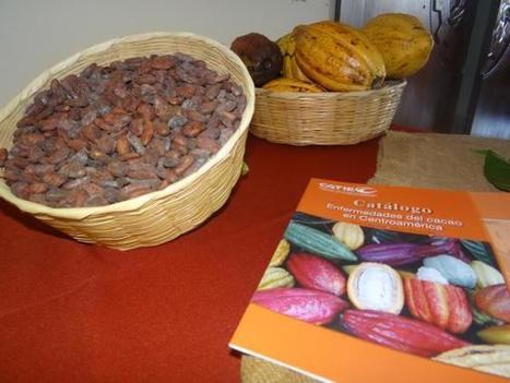 Mercados del Japón interesados en cacao hondureño | cacao | Scoop.it