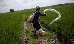 Farming mega-mergers threaten food security, say campaigners | IB GEOGRAPHY GLOBAL INTERACTIONS | Scoop.it