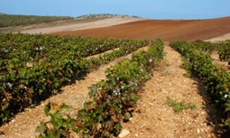 EPA Denies Texas' Emergency Request to Use Dangerous Herbicide on 3 Million Cotton Field Acres | EcoWatch | Scoop.it