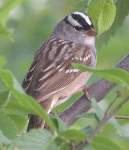 LIFE AT BOOMER LAKE: Birds of a feather really do flock together - Stillwater News Press | Earth Rangers' Science Content | Scoop.it