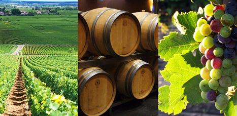 PLAN « BORDEAUX DEMAIN », POUR LA RATIONALISATION DE L'OFFRE BORDELAISE | Actualités du monde viticole | Scoop.it