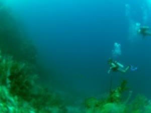 SCUBA DIVING: Waxing philosophical | Scuba Diving Adventures | Scoop.it