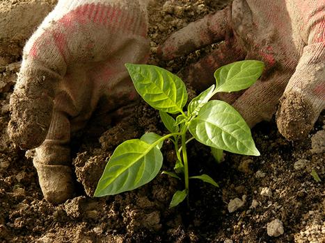Agroecology Europe : l'agroécologie s'arme pour conquérir l'Europe | Enseigner à produire autrement | Scoop.it
