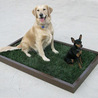 Dog Potty Box