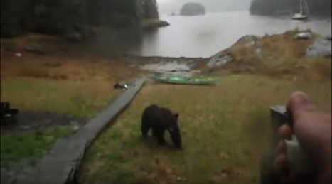 """Alaska bear encounter: """"Thanks for not eating my kayak... hey, stop, it's not even food!"""" — RT USA 