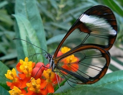 Michael Q Todd – Google+ - Butterfly numbers are rapidly declining. Hopefully we will… | PlanetNews | Scoop.it