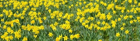 St David's Day | Topical English Activities | Scoop.it
