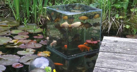 DIY Fish Tower and Silky Smooth Jazz | xposing world of Photography & Design | Scoop.it