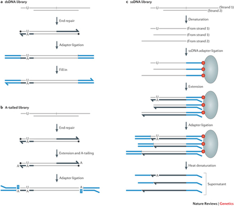 Reconstructing ancient genomes and epigenomes : Nature Reviews Genetics : Nature Publishing Group | Microbes | Scoop.it
