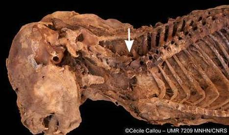 Egyptian dog mummy infested with bloodsucking parasites - NBC News.com   Egyptology and Archaeology   Scoop.it