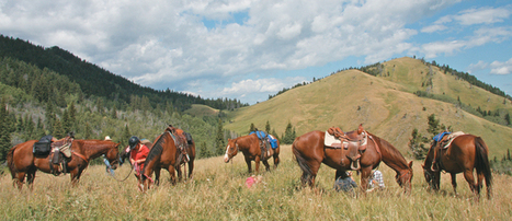 Veterinarians get weird to make horses feel good - The Western Producer | Hoofcare and Lameness | Scoop.it