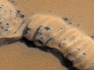 Are Those Spidery Black Things On Mars Dangerous? (Maybe) : NPR | leapmind | Scoop.it