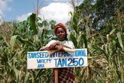 L'Afrique instrumentalisée par les pro-OGM | SWISSAID | Bio alimentation | Scoop.it