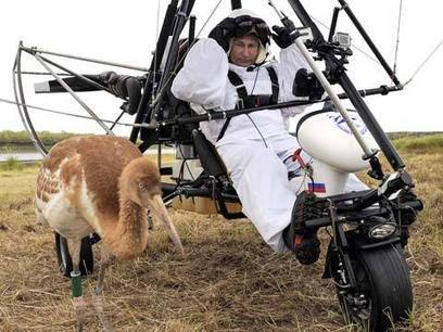 Putin pilots hang-glider to lead endangered cranes on migration route | No Such Thing As The News | Scoop.it