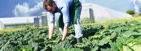 L'agriculture Bio nécessite un accompagnement de l'ensemble de la chaîne de production | Communiqu'Ethique sur la santé et celle de la planette | Scoop.it