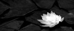 Meditación como competencia: neurociencia y meditación | Empresa 3.0 | Scoop.it