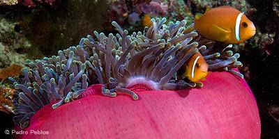 Scuba Diving in the Maldives | ediving | Scoop.it