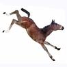 Fran Jurga: Equestrian Sport News
