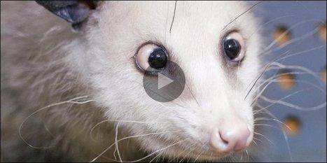 «Heidi» souffrait trop, elle a été euthanasiée | Mais n'importe quoi ! | Scoop.it