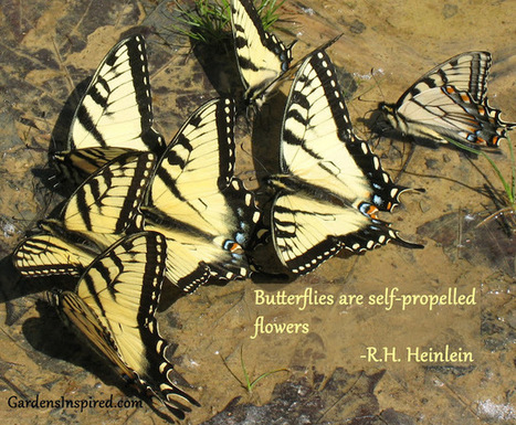Quote by R. H. Heinlein | The Muse | Scoop.it