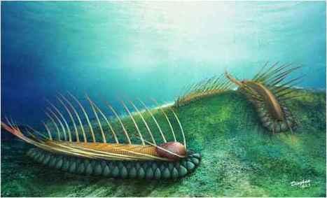 Descubren pequeña criatura marina con ca...