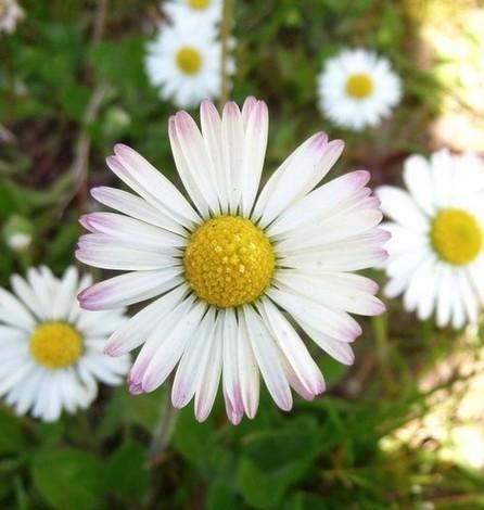 Une fleur aussi belle qu'un sourire | The Blog's Revue by OlivierSC | Scoop.it