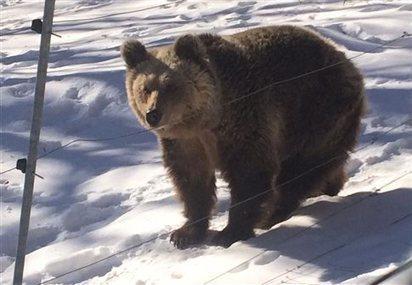 Έπεσαν για χειμέριο ύπνο οι αρκούδες του Αρκτούρου | SCIENCE NEWS | Scoop.it