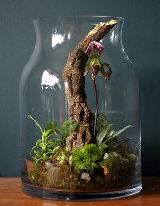 Slipper Orchid Terrarium Terrariums Scoop It
