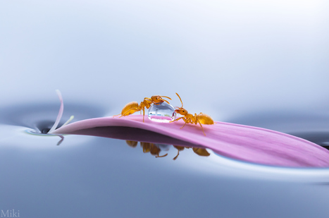 Share by Miki Asai   Reflejos   Scoop.it