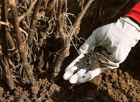 Utiliser les engrais naturels | jardins et développement durable | Scoop.it