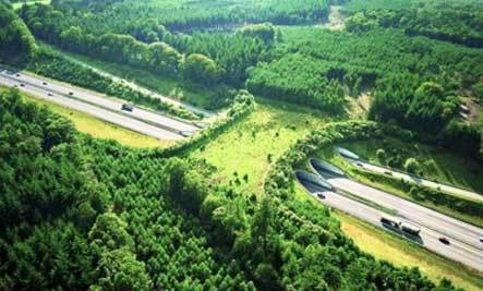 7 Amazing Overpasses for Animals | Sustainable Intelligence | Scoop.it