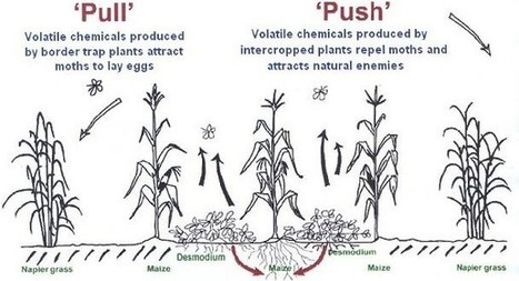 PUSH-PULL TECHNOLOGY | Parasitic Plants | Scoop.it