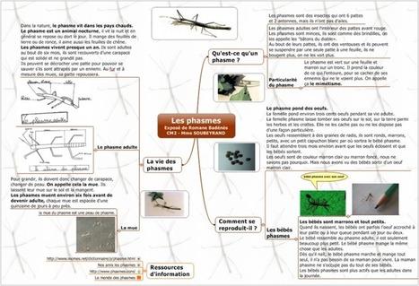 Une pratique pédagogique innovante : le Mind Mapping | Human Mapping | Le blog du Mind Mapping | Apprendre à apprendre | Scoop.it