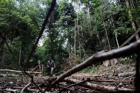 Amazon deforestation reduced by nearly 84% - Brazil - Rappler | Climate Smart Agriculture | Scoop.it