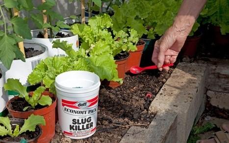 Millions of 'killer slugs' set to take over UK gardens   Food issues   Scoop.it