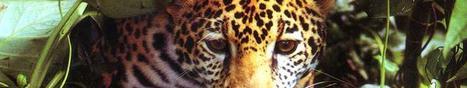 David Attenborough - Wonderful World - BBC | The 21st Century | Scoop.it