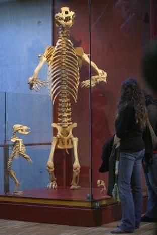 Restos de osos de Atapuerca demuestran la posibilidad de lograr ADN prehistórico - 20minutos.es | historian: science and earth | Scoop.it