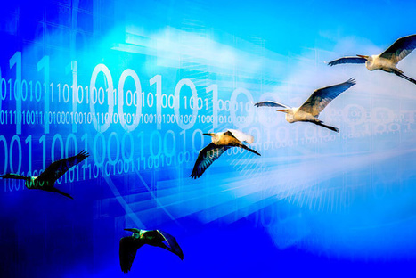 3 reasons why 2017 will see massive cloud migration   CloudInfos   Scoop.it