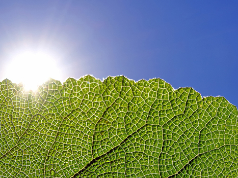 From Thin Air: Making Fuel Like a Tree | Biomimicry | Scoop.it