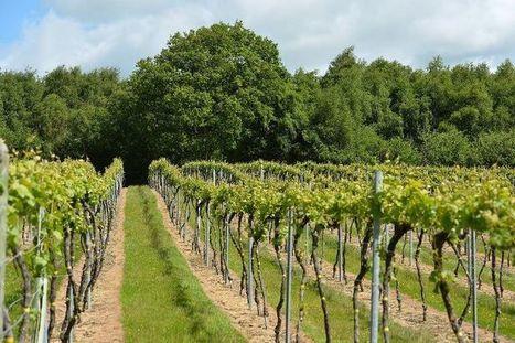 La cote des vins britanniques monte, la convoitise aussi - Libération   Le Vin en Grand - Vivez en Grand ! www.vinengrand.com   Scoop.it