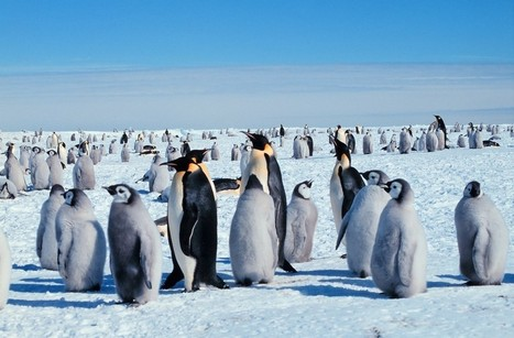 SeaWorld Stole Penguin Chicks From Their Parents In Antarctica | All about water, the oceans, environmental issues | Scoop.it