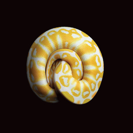 Snakes in a Frame: Mark Laita's Stunning Photographs of Slithering Beasts | Smithsonian | Merveilles - Marvels | Scoop.it