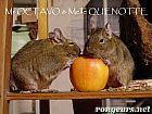 Rongeurs : lapin, cochon d'Inde, hamster, ecureuil | Ressources d'autoformation dans tous les domaines du savoir  : veille AddnB | Scoop.it