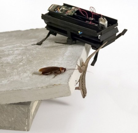 DASH robot mimics cockroaches' disappearing act | The Robot Times | Scoop.it