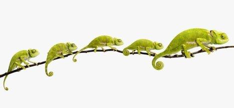 Leadership: How to Get From Good to Great | Transformación y cambio de Creencias | Scoop.it